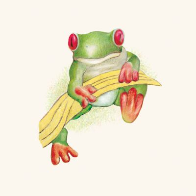 Red-eyed-tree-frog-by-Mark-Lerer
