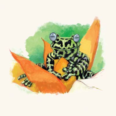 Tigers-Tree-frog-by-Mark-Lerer