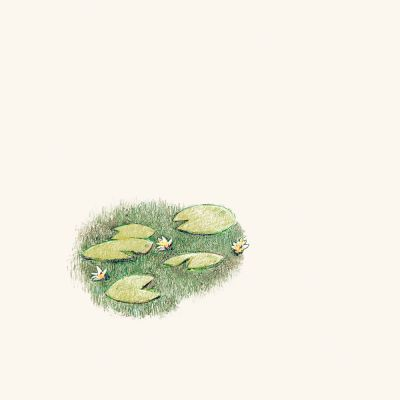 Lily-Pad-drawing-by-Mark-Lerer