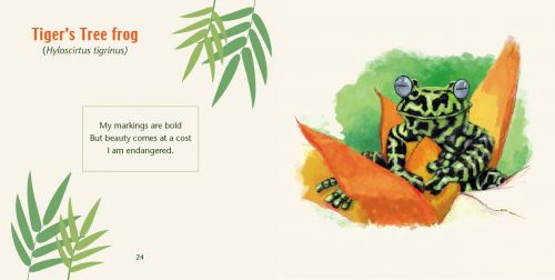 tigers-tree-frog-spread-from-Rainforest-Frogs-book