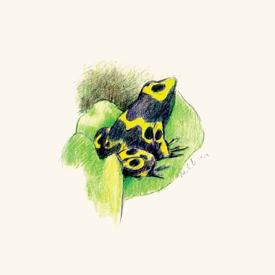 Yellow-Banded-Poison-dart-frog-by-Mark-Lerer