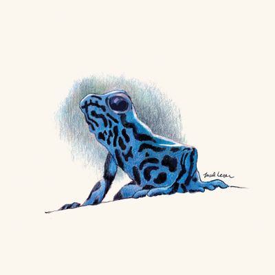 Blue-Poison-Dart-frog-by-Mark-Lerer